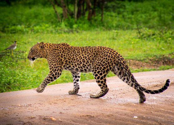 Wildlife and Safari